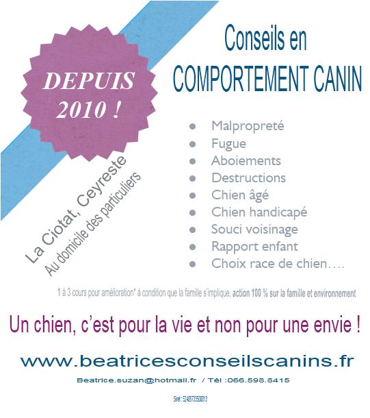 CARTE CONSEILS COMPORTEMENT CANIN