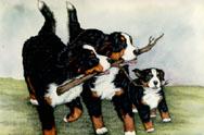 Dog bbf