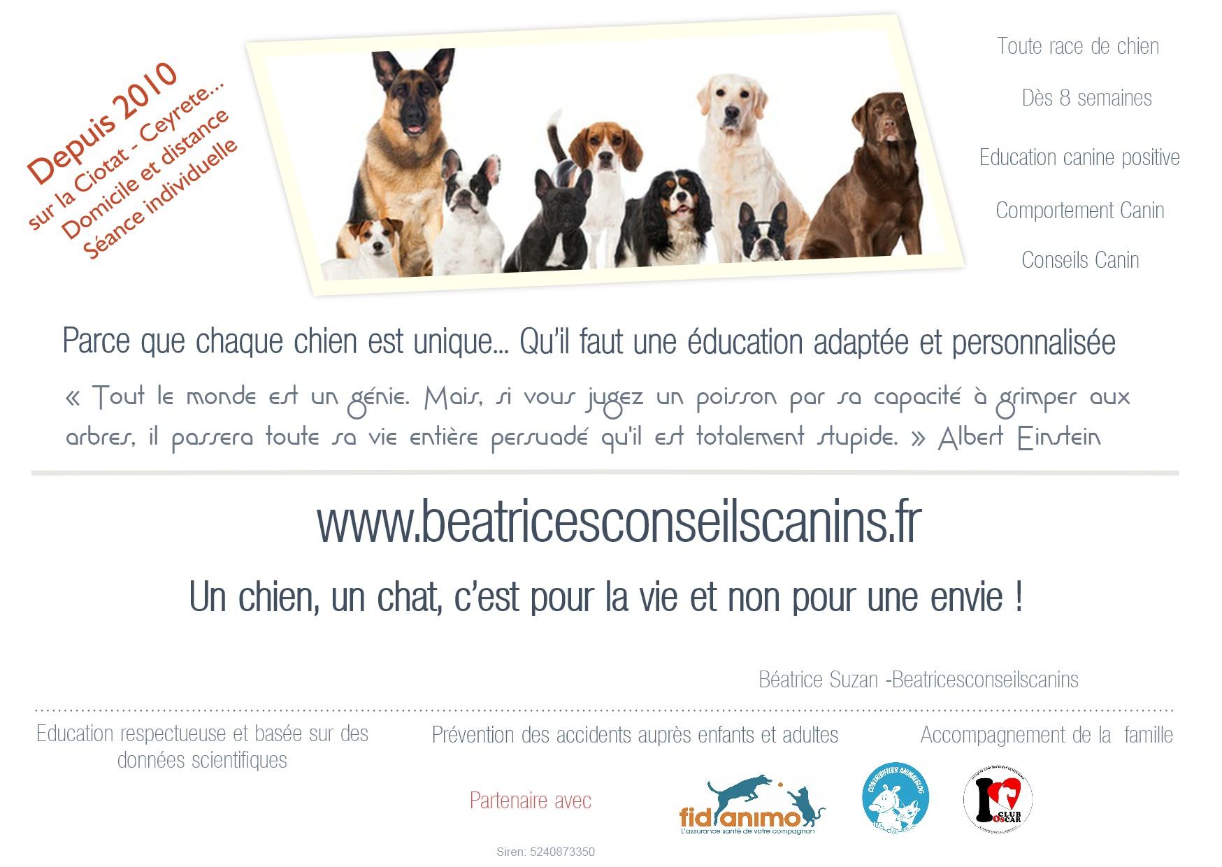 prix d une formation educateur canin