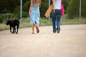 Promenade chien3